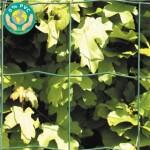 Havehegn, maske 10 x 10 cm - 110 cm x 25 meter Grøn