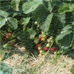 Fuglenet HORTUS 5 x 3 m, 18 x 18 mm, grøn