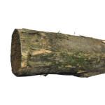 Pæl rund, robinie, Ø8/10 cm x L: 200 cm